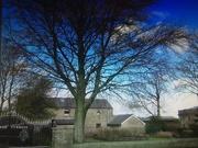 18th Feb 2021 - Beech tree in Turrets Garden.