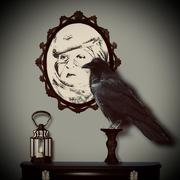 18th Feb 2021 - The raven