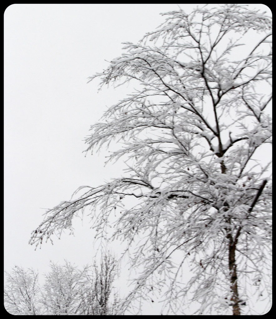 Tree with snow by mittens