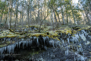 18th Feb 2021 - Icicles, rocks, and moss