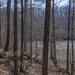 Creekside Hike