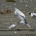 Breakfast tern style - delivered by air