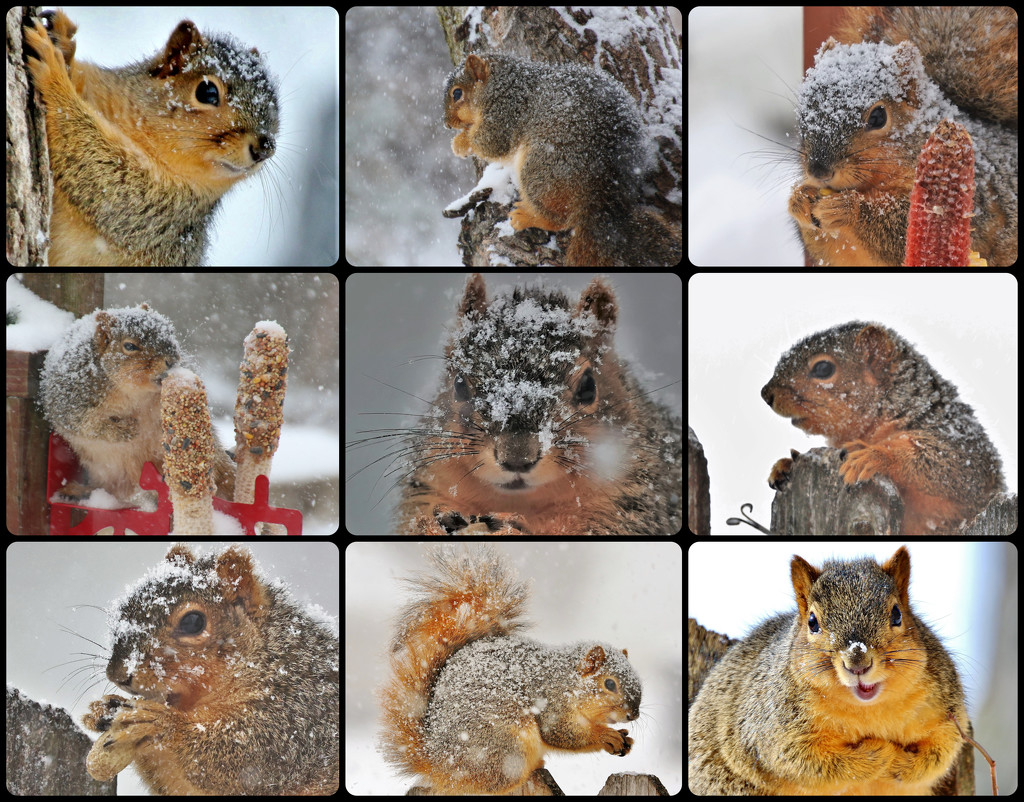 Snowy Squirrel Squares by lynnz