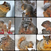 Snowy Squirrel Squares