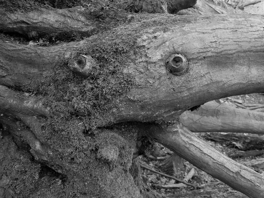Trosley Monster  by serendypyty