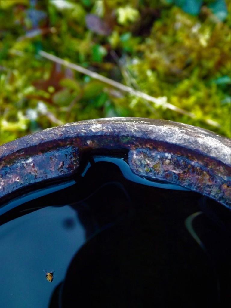 Boat beetle blues by ajisaac