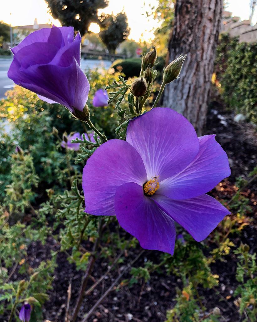 Purple by loweygrace