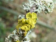 18th Feb 2021 - More lovely lichen