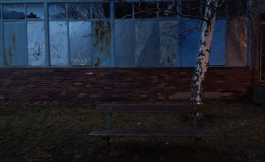 Simple Early Evening Scene with a Birch and a Bench.  by kclaire