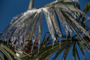 19th Feb 2021 - Icy Palm Fingers