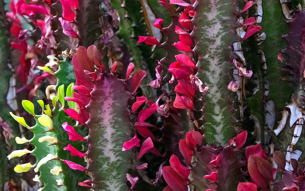 Cactus in Bloom by redy4et