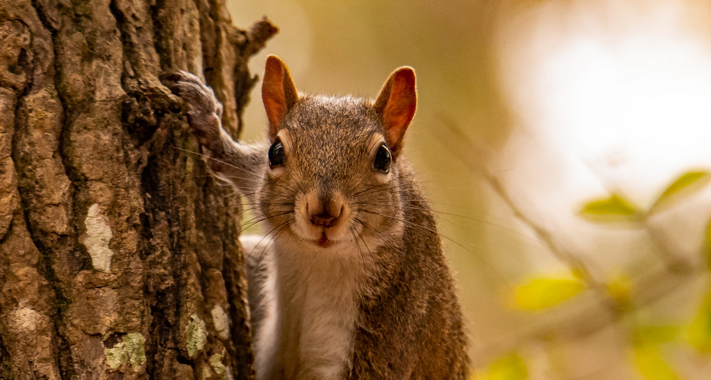 Squirrel Up Close! by rickster549