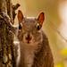 Squirrel Up Close!