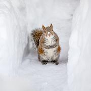 20th Feb 2021 - Icebox Squirrel