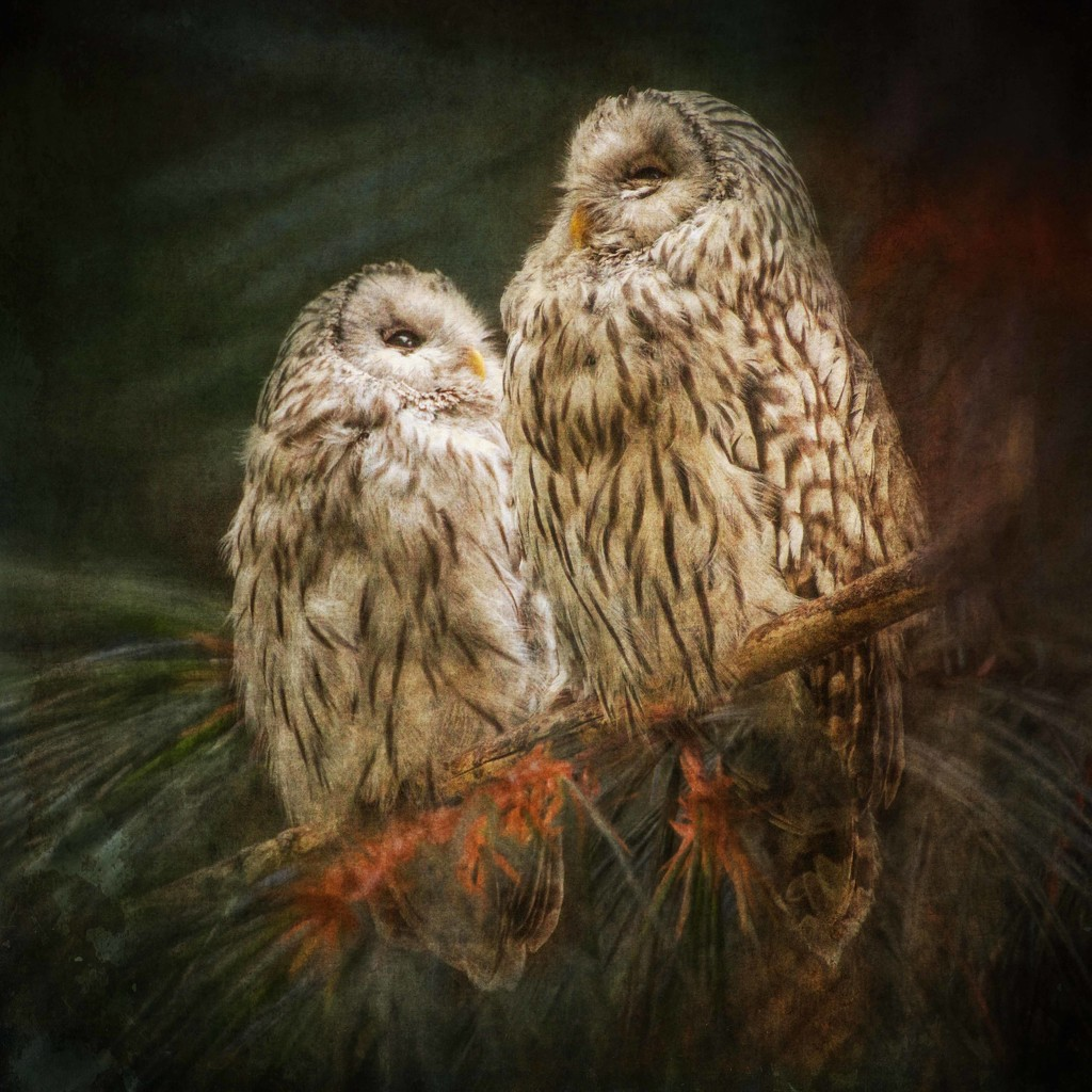 Pair of Owls  by shepherdmanswife