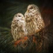 20th Feb 2021 - Pair of Owls