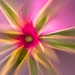 Creative blur bromeliad