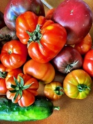20th Feb 2021 - Summer harvest