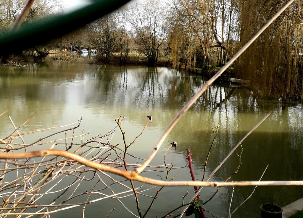 A calmer river by mave