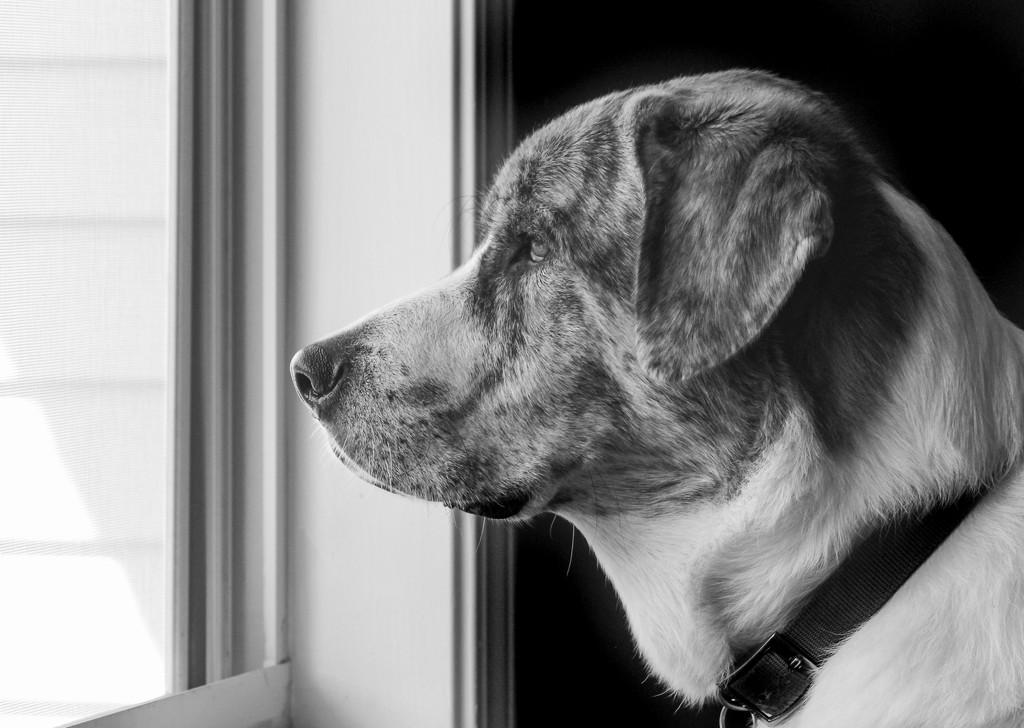 Neighborhood Watch by kvphoto