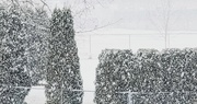 18th Feb 2021 - More Snow