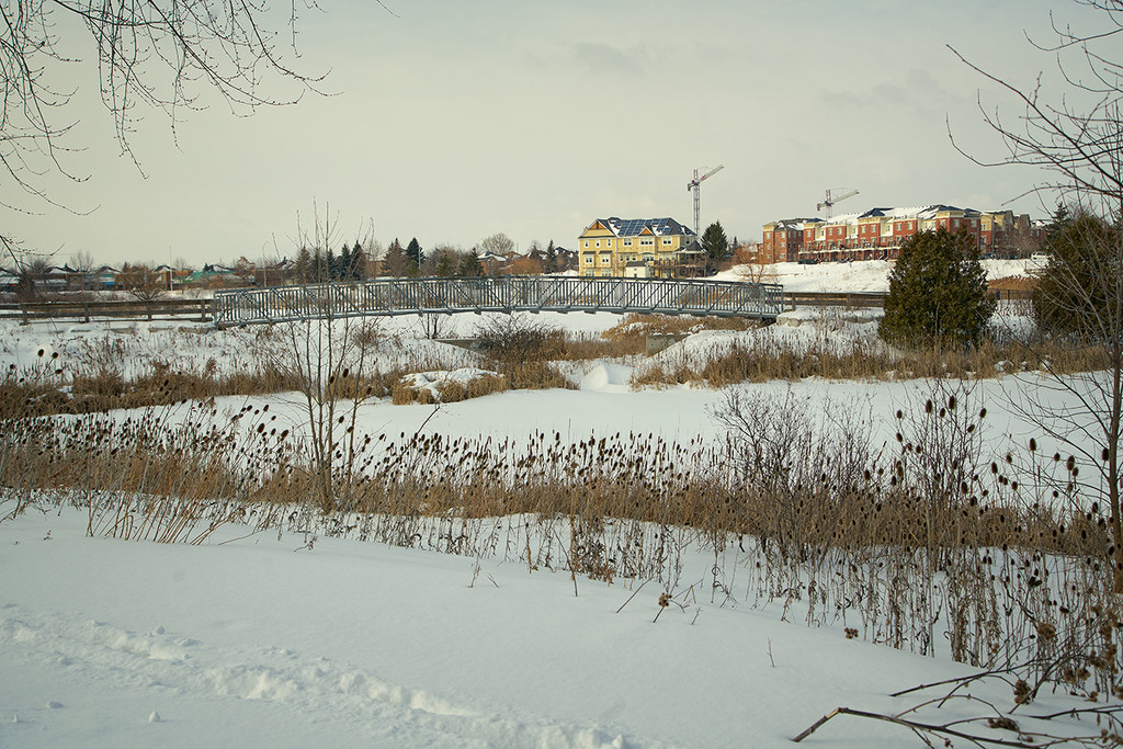 Winter Scene by gardencat