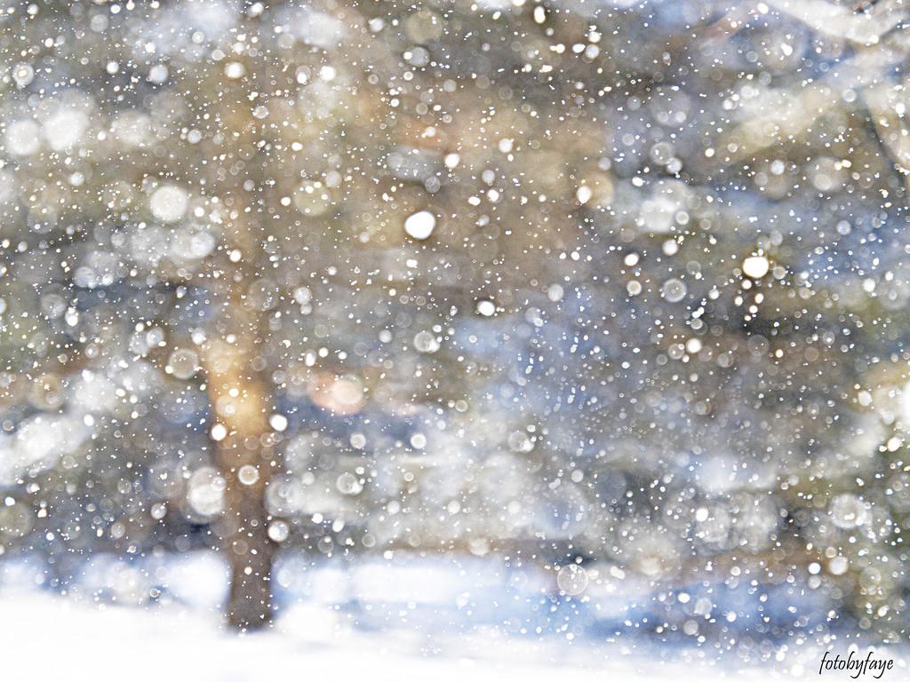 Snowy Days by fayefaye