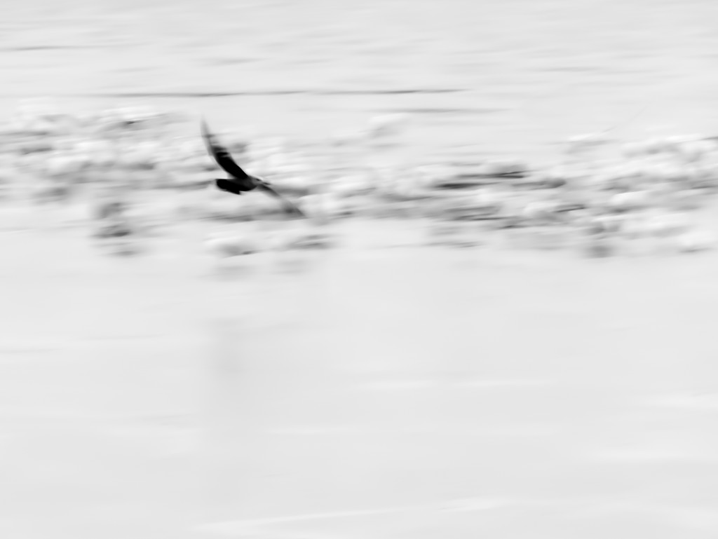 take flight by northy