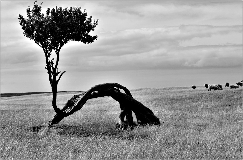 The old tree by sandradavies