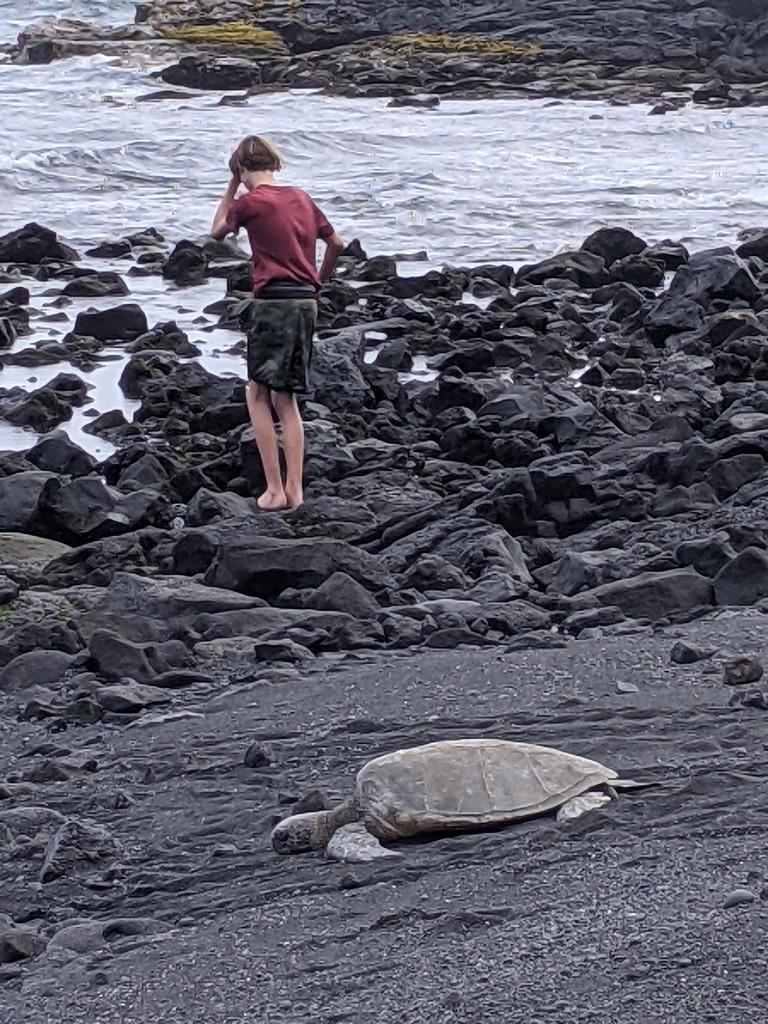 Punalu'u Beach turtle by bambilee