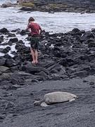 20th Feb 2021 - Punalu'u Beach turtle
