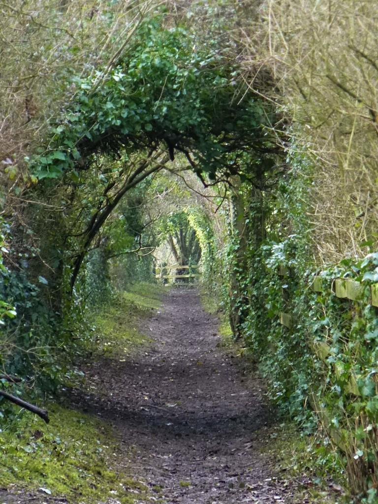 Path Less Travelled by 30pics4jackiesdiamond