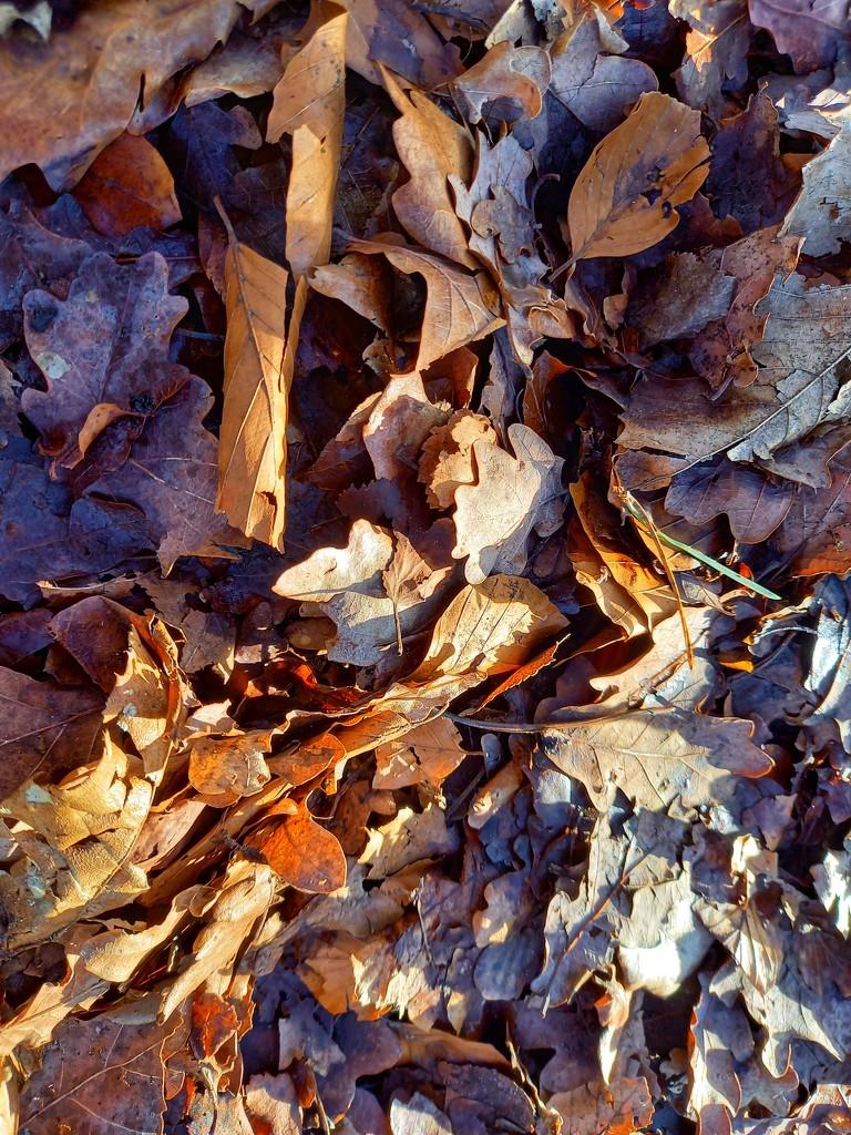 Feb 16th Oak Leaves by valpetersen