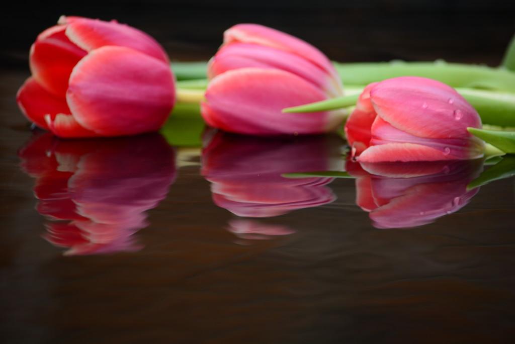 Tulips floating........ by ziggy77
