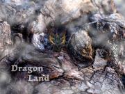 22nd Feb 2021 - Dragon Land...
