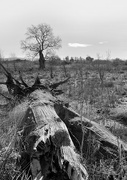 21st Feb 2021 - A lone tree