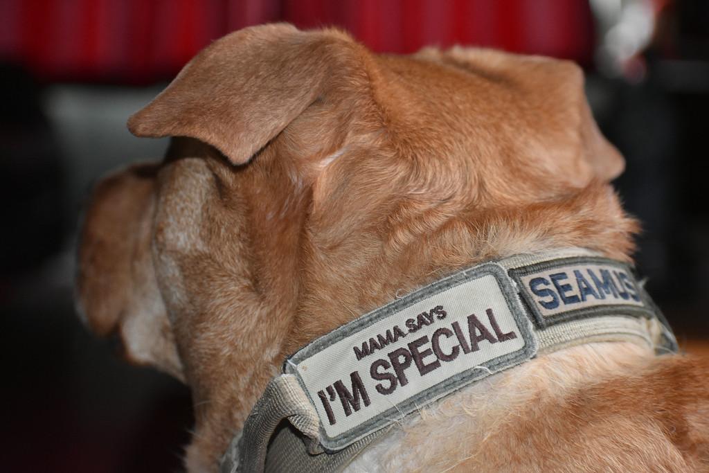 He's special, I said so! by homeschoolmom
