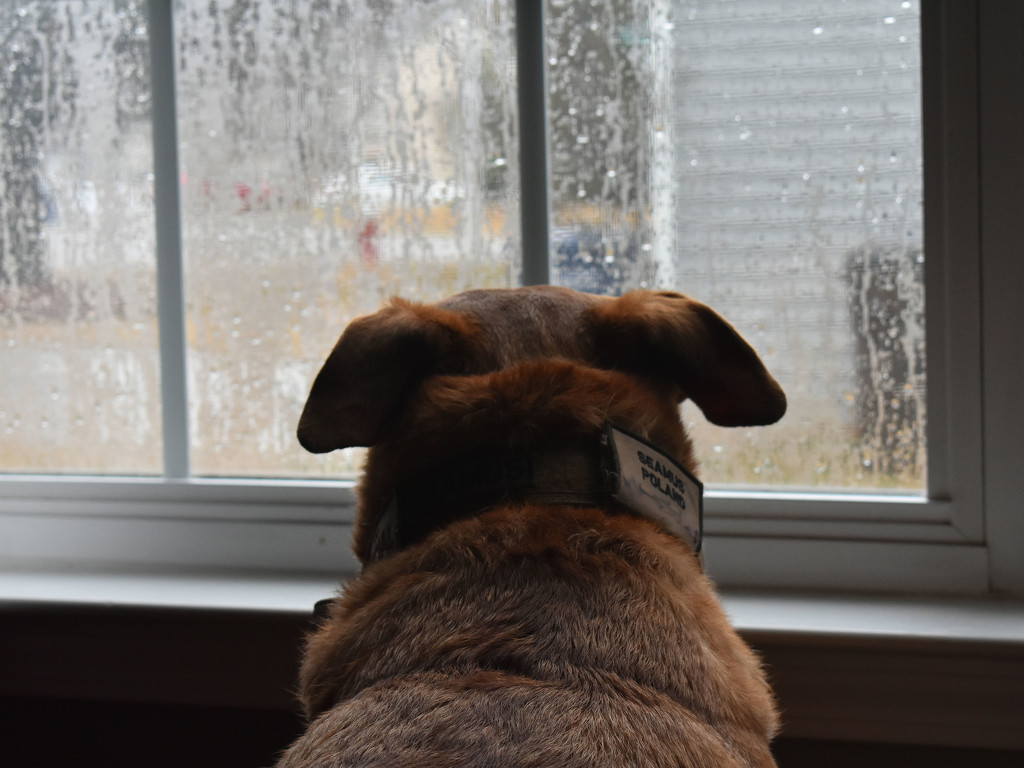 Longing to be outside by homeschoolmom