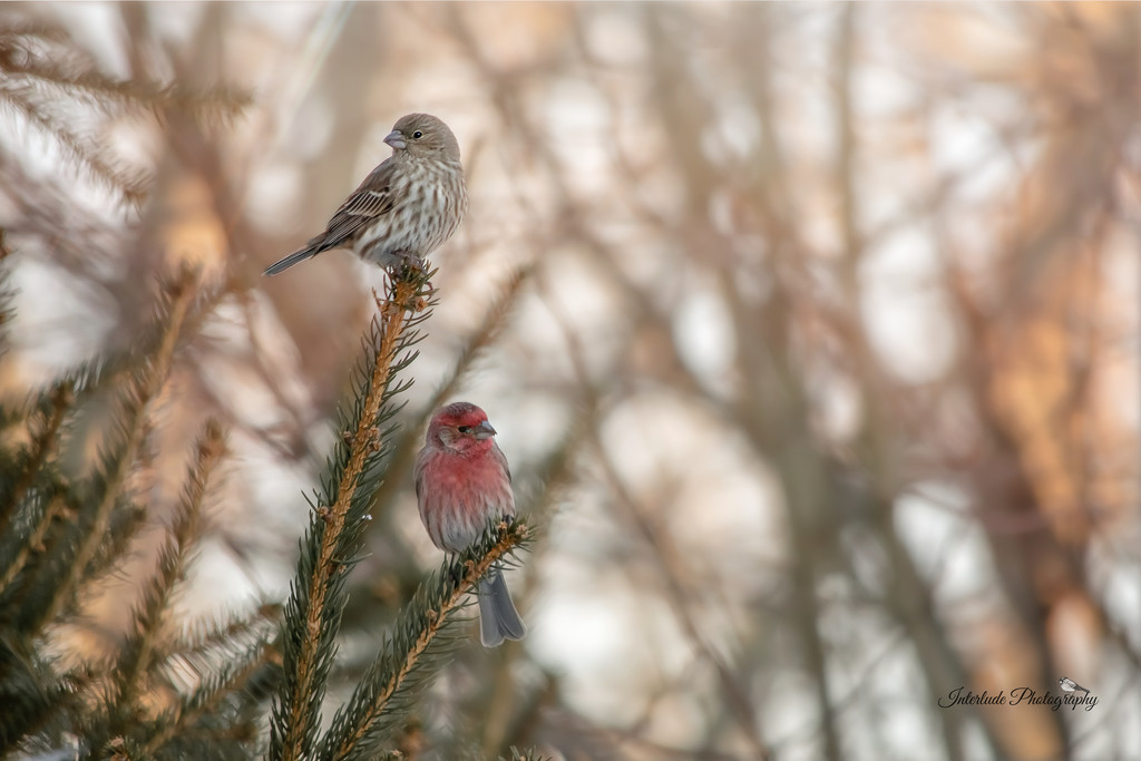 Winter Birds by interludephotographyky