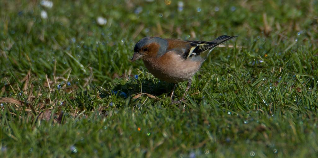 Bird by orriols