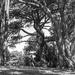 Lady, Trees... by yaorenliu