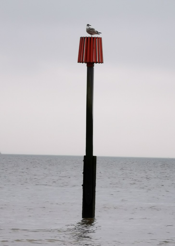 Gull on a Breakwater Marker by plainjaneandnononsense
