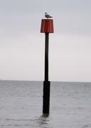 22nd Feb 2021 - Gull on a Breakwater Marker