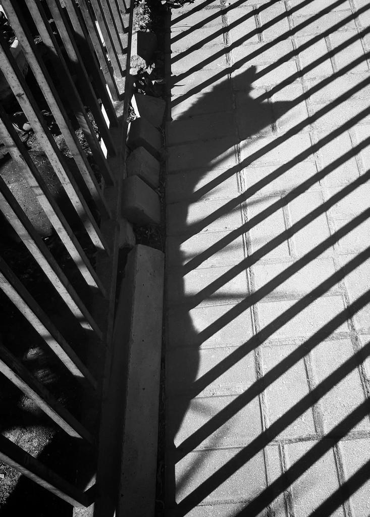 Shadow Play by salza