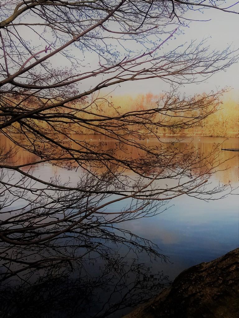 Reflecting by filsie65