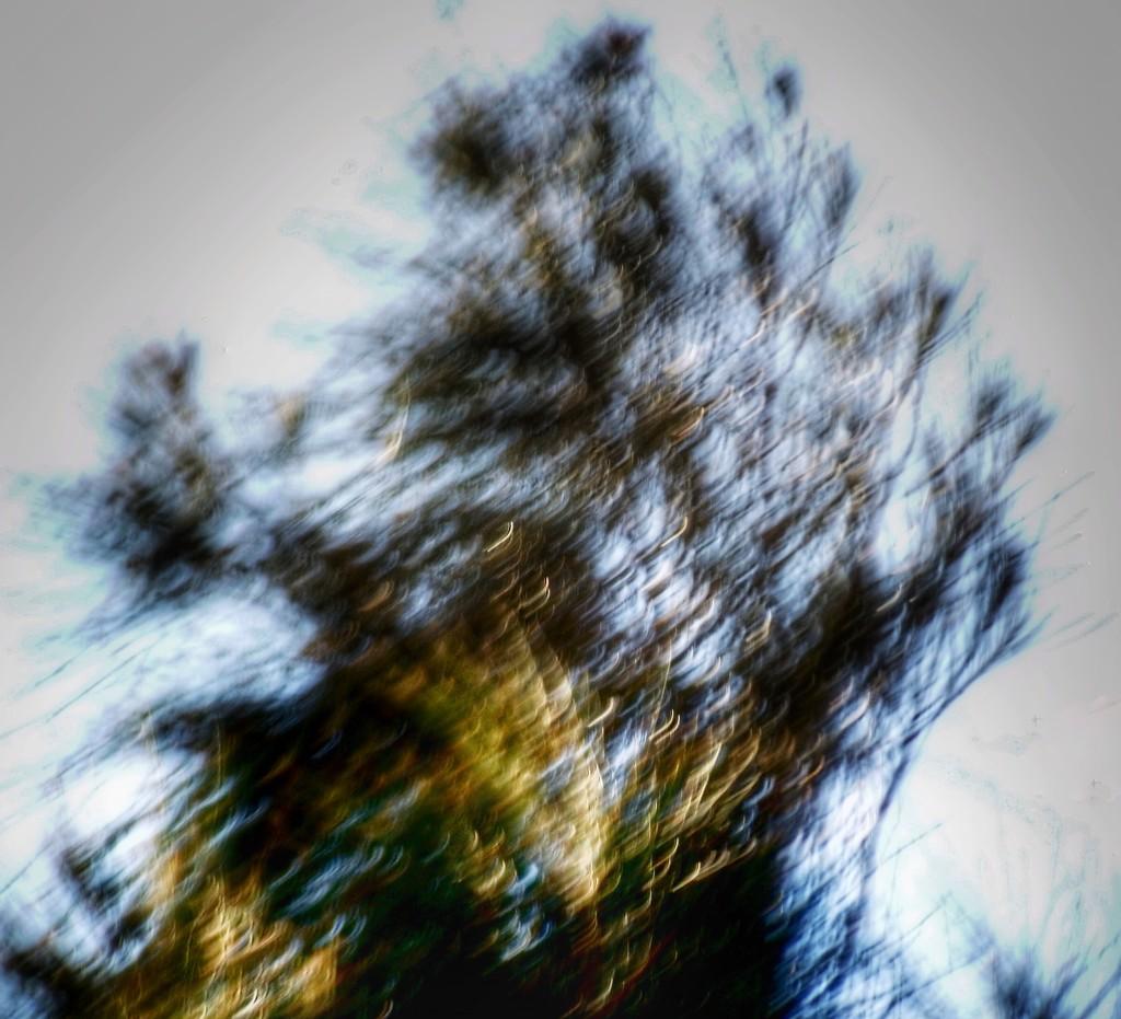 Windy by joemuli