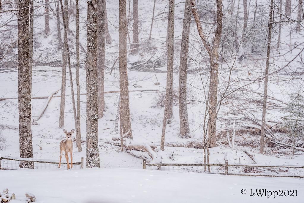 Oh Deer  by lesip