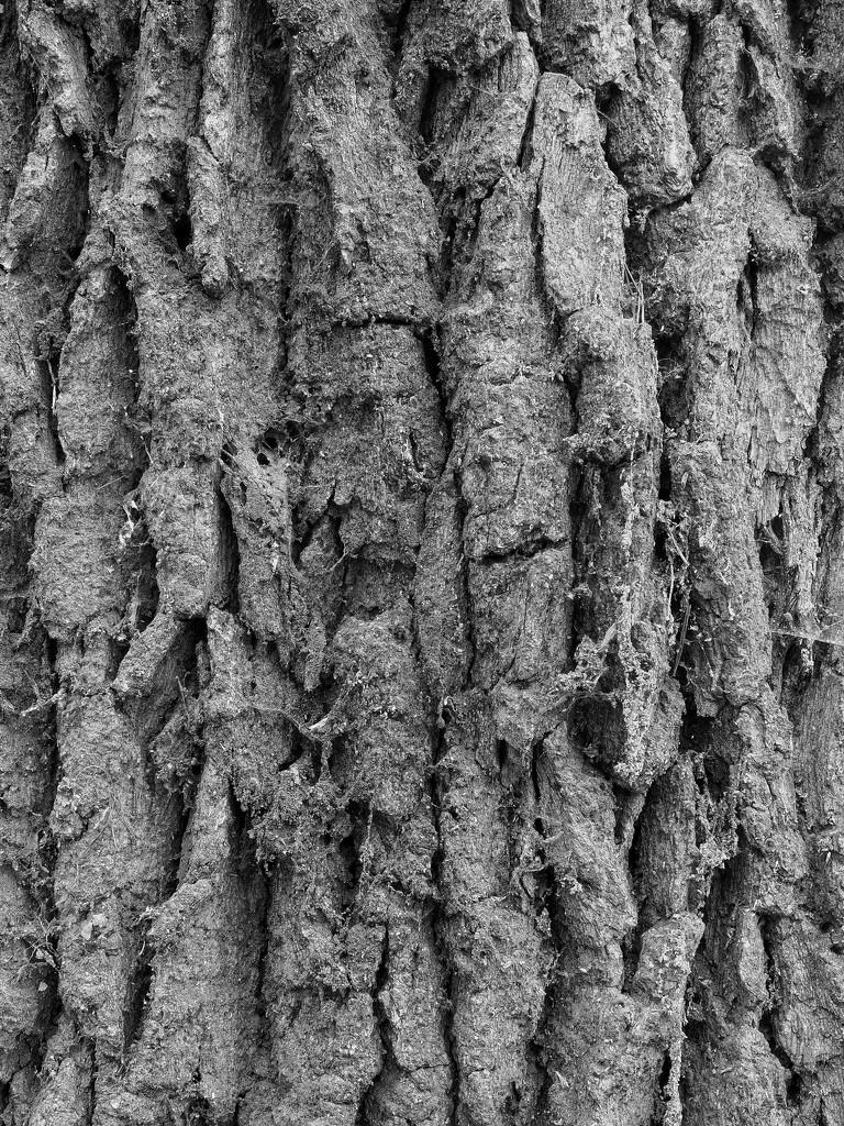 Old oak bark by monikozi