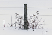 20th Feb 2021 - Keeping the Fence Post Company