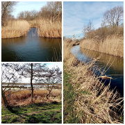 23rd Feb 2021 - Watery Fenland Walk
